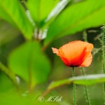 Flora_01