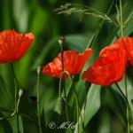 Flora_03