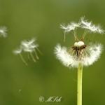 Flora_05