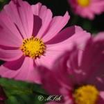 Flora_06