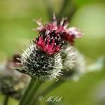 Flora_12