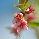 Flora_14