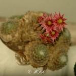 Flora_15