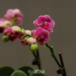 Flora_18