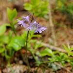 Flora_21