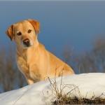 Hunde_001