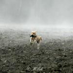Hunde_004