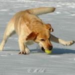 Hunde_006