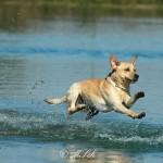 Hunde_011