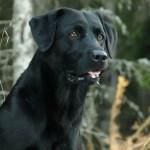 Hunde_023