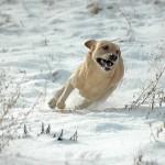 Hunde_027