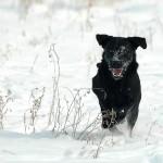 Hunde_028