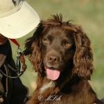 Hunde_030