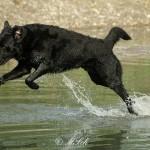 Hunde_031