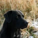 Hunde_034