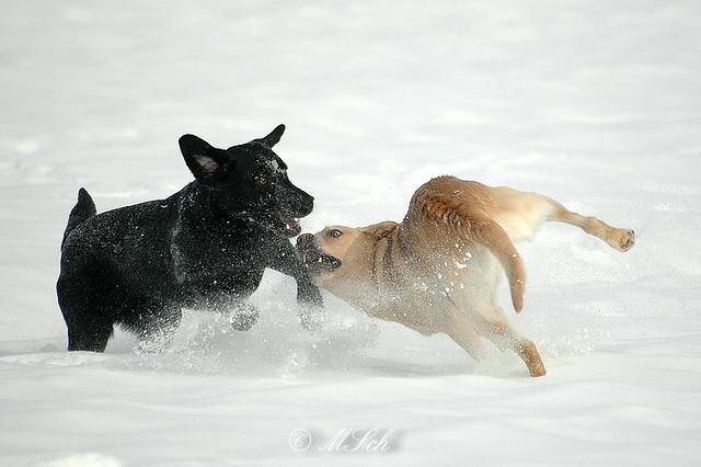 Hunde_035