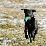 Hunde_036