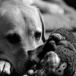 Hunde_037