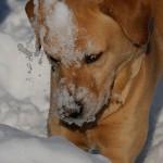 Hunde_038