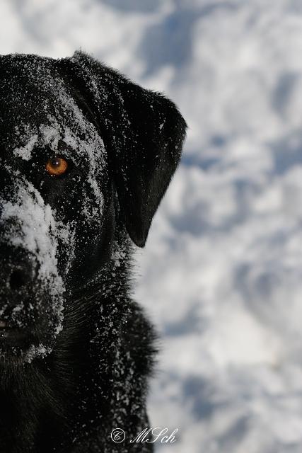 Hunde_039