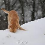 Hunde_040
