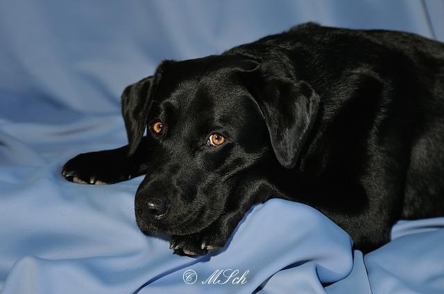 Hunde_042