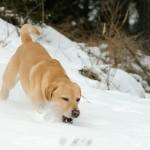Hunde_043