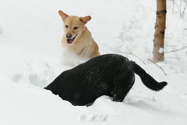 Hunde_044