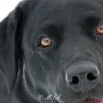 Hunde_045