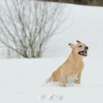 Hunde_046