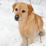 Hunde_047