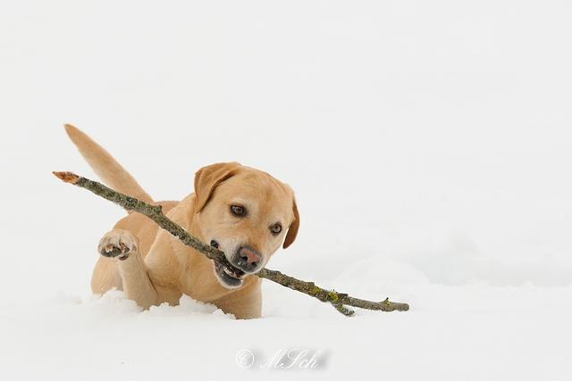 Hunde_048