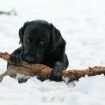 Hunde_049