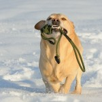 Hunde_050