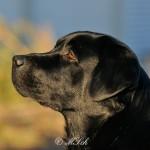 Hunde_052