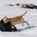 Hunde_054