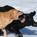 Hunde_055