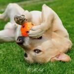 Hunde_057