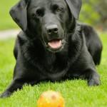 Hunde_058