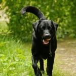 Hunde_059