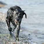 Hunde_061