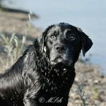 Hunde_063