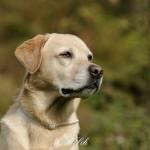 Hunde_064