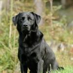 Hunde_065