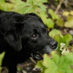 Hunde_066