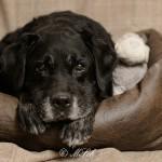 Hunde_068
