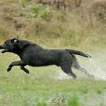 Hunde_069