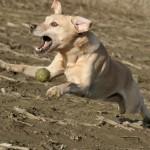 Hunde_071