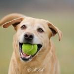 Hunde_073