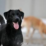 Hunde_074